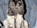 05 Dr. Jazz hond